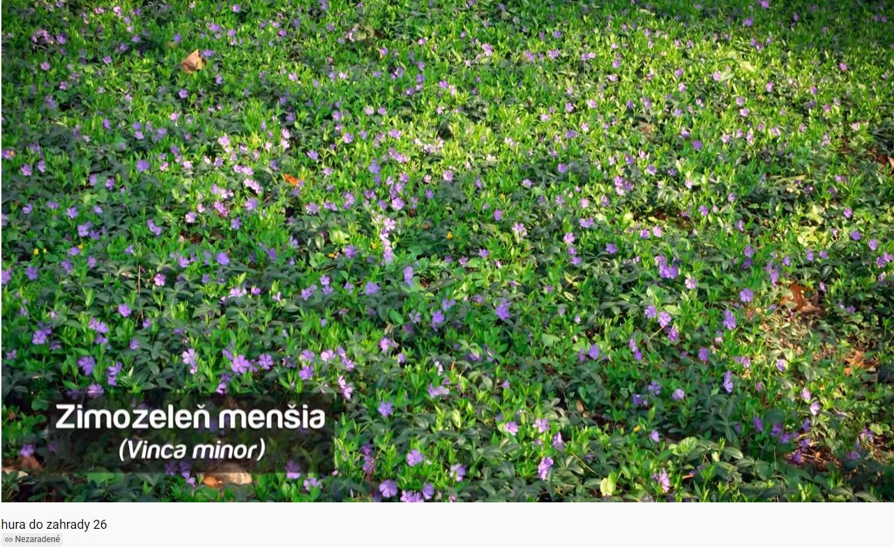 Herbár kvetín, kríkov a stromov - Obrázok č. 484