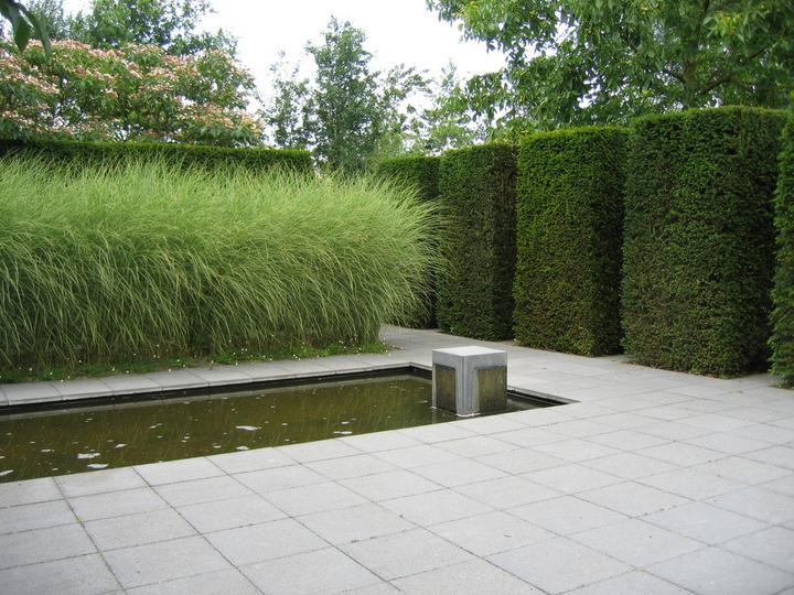 Zahrada - Obrázek č. 62