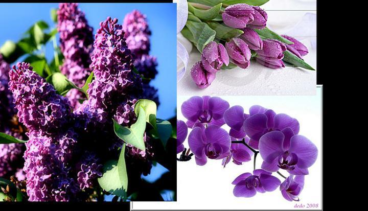 Purple Wedding Dreams..:o) - Orgovan, tulipan alebo orchidea? Nieco z toho urcite! a k tomu drobne pivonky:)
