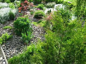 záhrada leto 2013