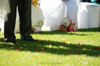 takto sa drží na svadbe havkáč