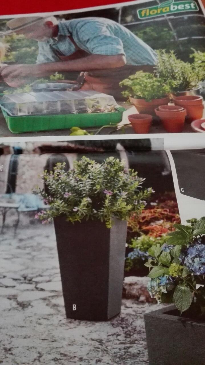 Viete mi prosím povedať, ako sa volá rastlinka v kvetináč? Ďakujem - Obrázok č. 1