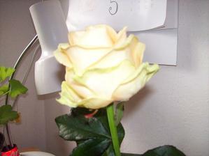 tak tyto budu mít v kytce :) a ještě drobnější bílé růže a bílé frézie