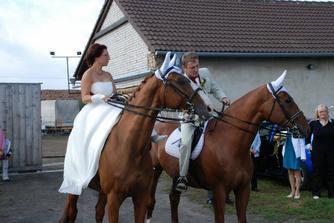 naši koníci si museli pořádně prohlídnout koně ve vozech