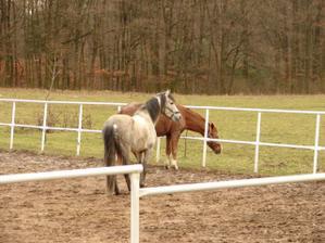 Tady koně, tam koně...