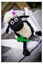 moje úžasná ovečka, ženich měl druhou....