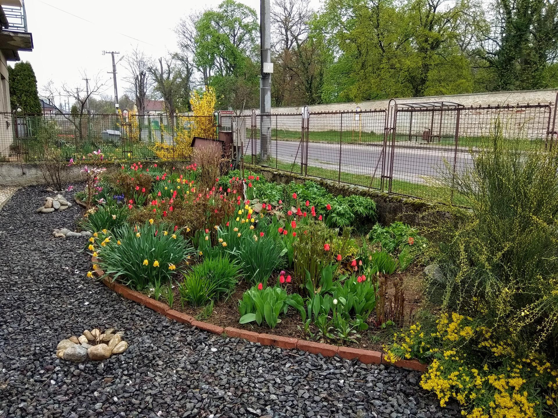 Naša záhrada 2020 v priebehu roka, moja a manželova záľuba... - Obrázok č. 1