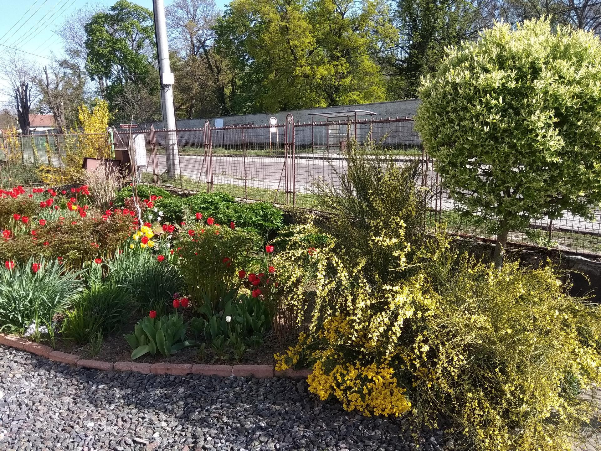 Naša záhrada 2020 v priebehu roka, moja a manželova záľuba... - Obrázok č. 3