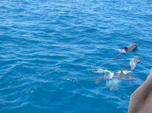 cestou jsme videli i delfíny, byl to nezapomenutelný zážitek......