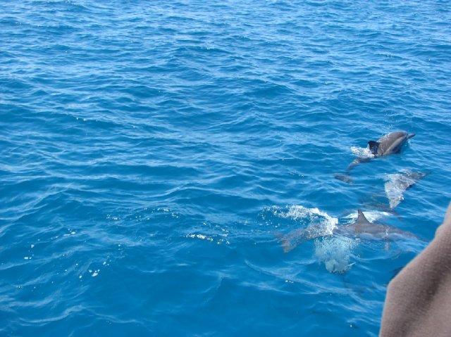 marta{{_AND_}}Miloš - cestou jsme videli i delfíny, byl to nezapomenutelný zážitek......