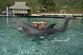 Polynézia, 2005