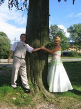 u stromu ...