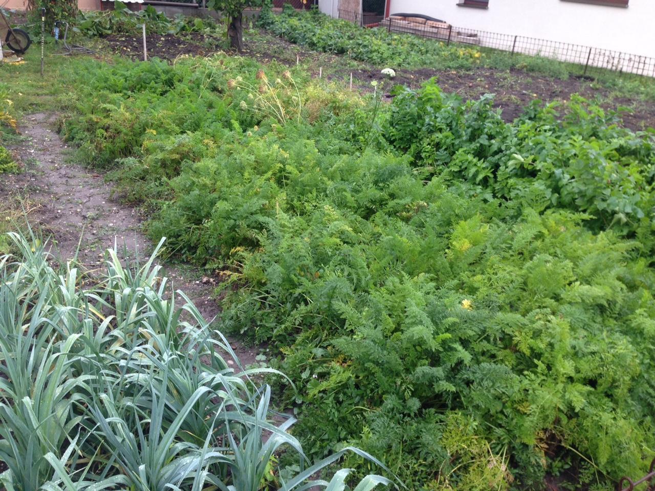 Zopár fotografií zo záhradky.... - Obrázok č. 3