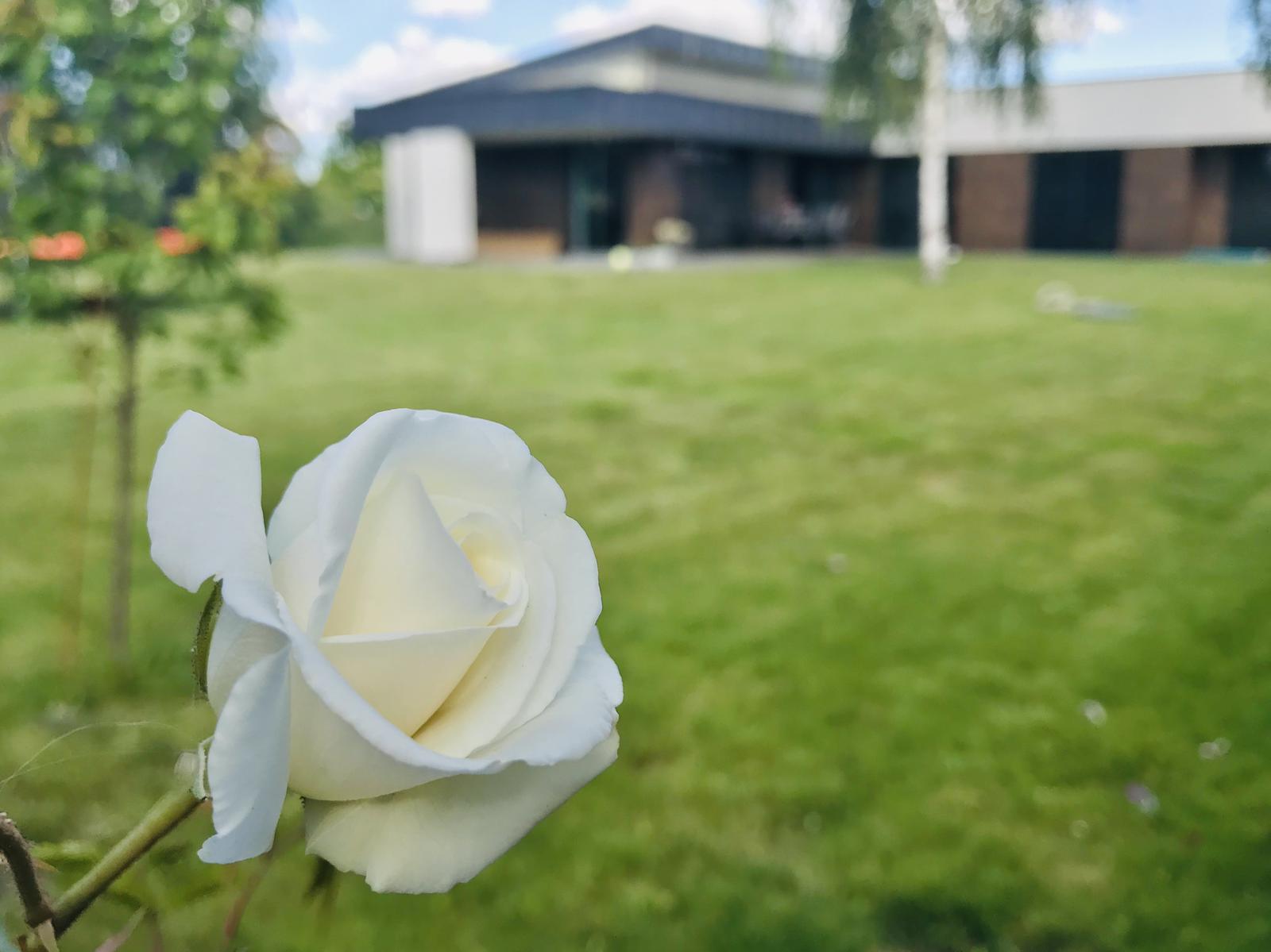 2020 - Bílé růže ❤️