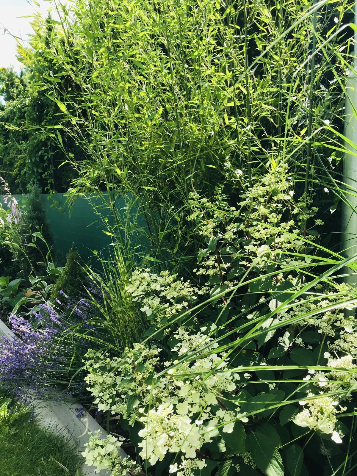 2020 - Trosku džungle - bambus a bílá hortenzie latnatá