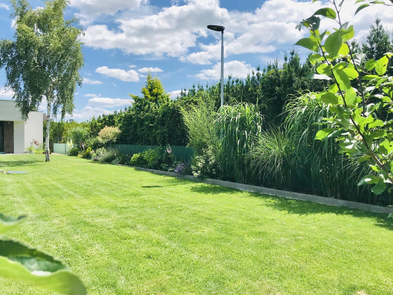2020 - Zelený plot - bariéra medzi sousední