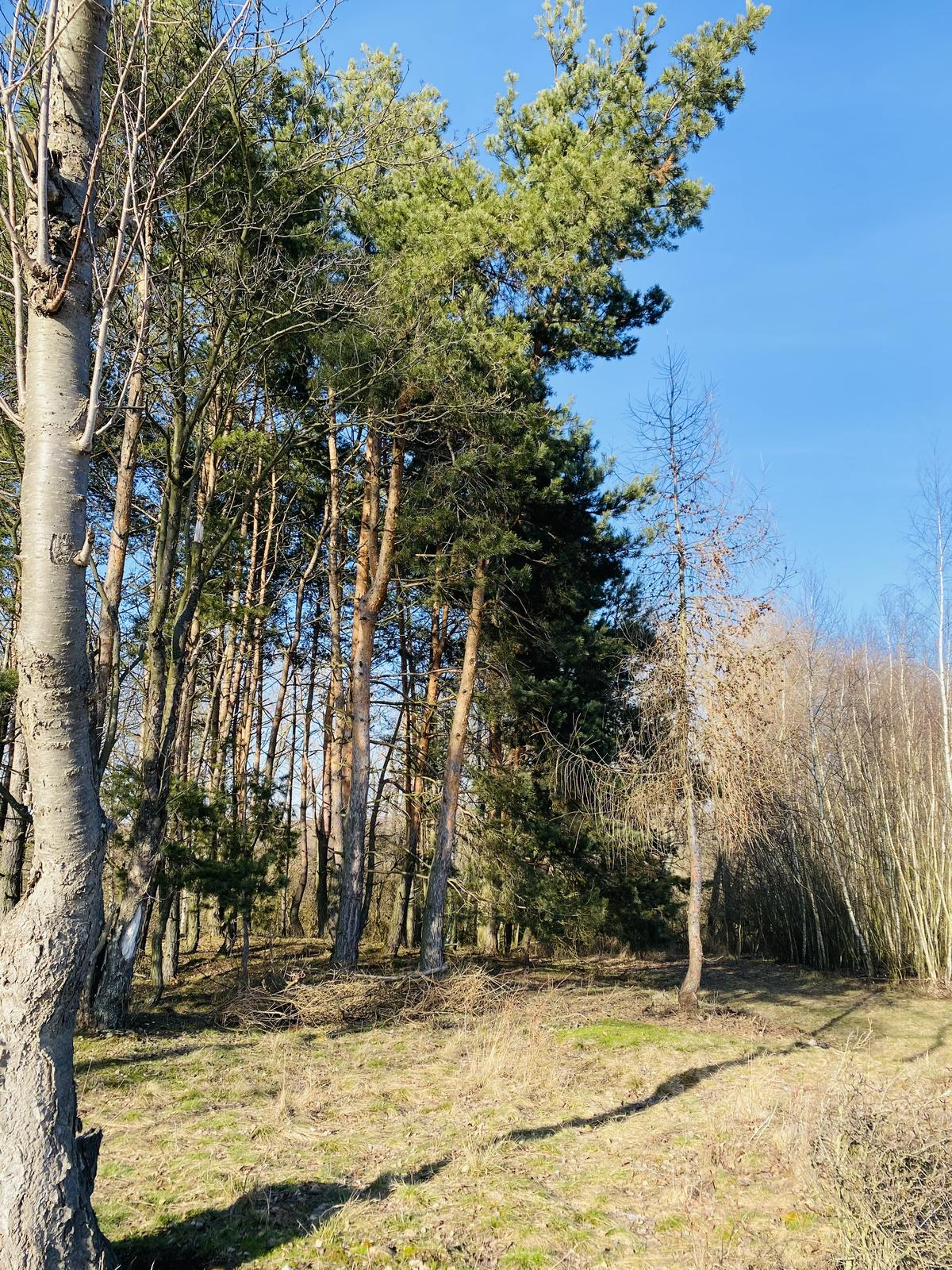 🏚 - Lesík za domem. Pro naše kluky lepší než sto hřišť