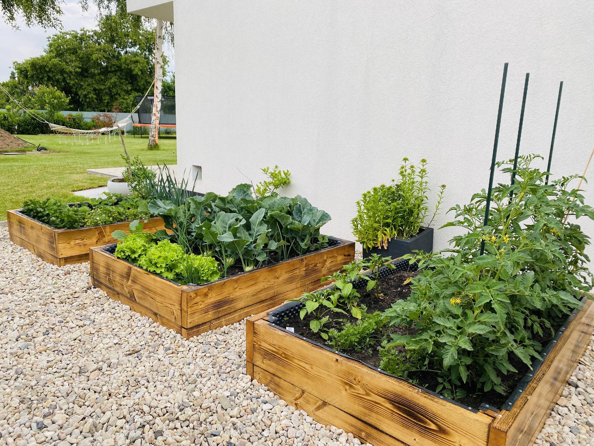 🏚 - Paradajky, mrkva, paprika. Šalát, cibuľa, kel, fazuľové lusky. Jahody , celer, pór a bylinky.