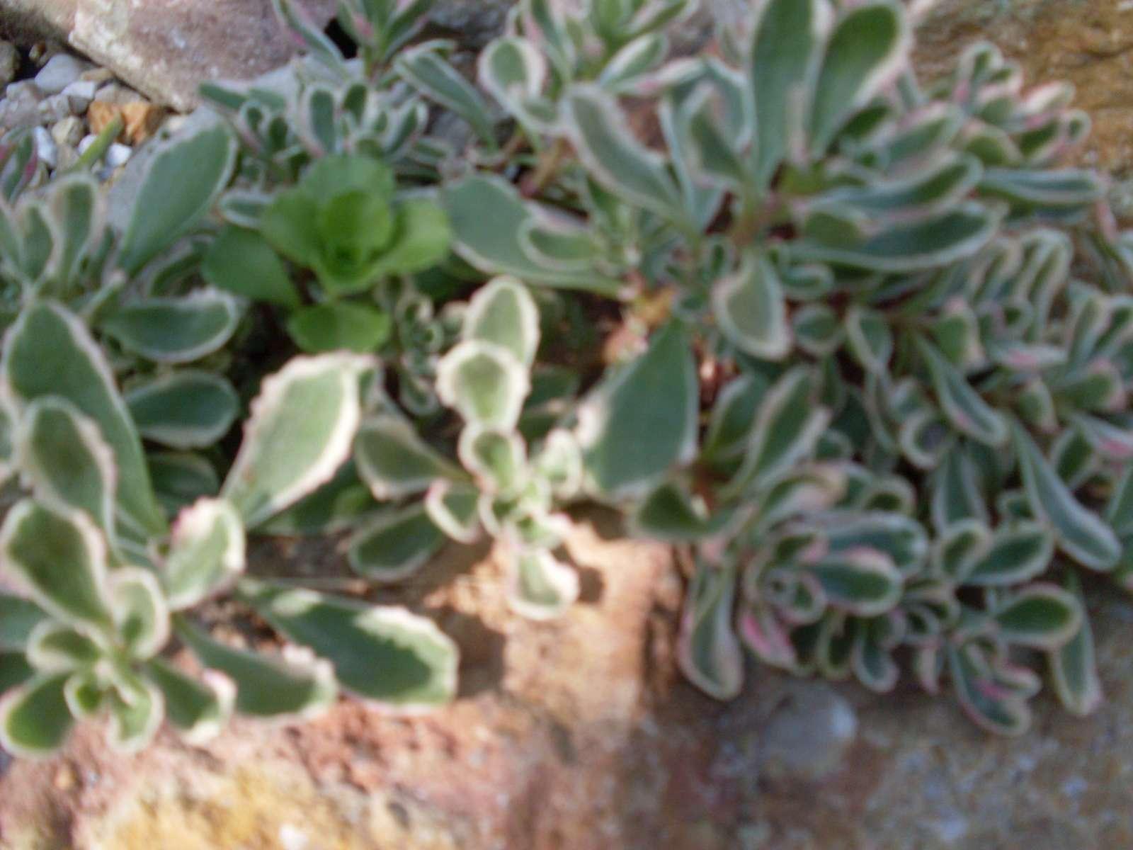 Rôzne trvalky a skalničky - Obrázok č. 1