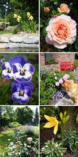květnová zahrada