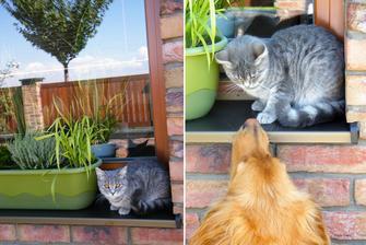 Na okně seděla kočka  . . .