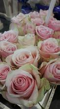 Pink Athena