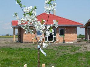 zasadili sme si prvý strom.višňu a už má aj zelené bobuľky :-))))))