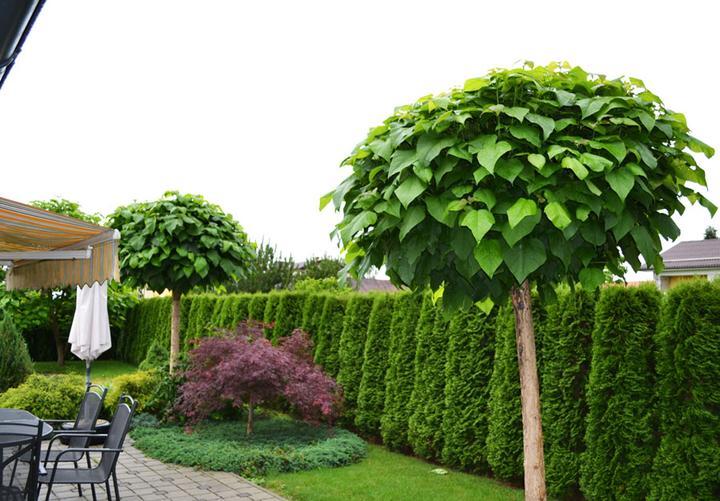 Inšpirácie pre moju (tvoju) záhradu ;) - Obrázok č. 51