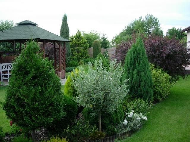 Inšpirácie pre moju (tvoju) záhradu ;) - Obrázok č. 79