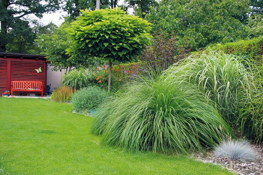 Inšpirácie pre moju (tvoju) záhradu ;) - Obrázok č. 250