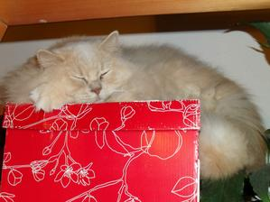 náš kocúr Garfield :-)
