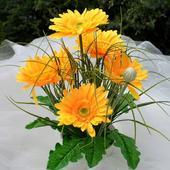 Aranžovaná dekorace gerbery žluté,