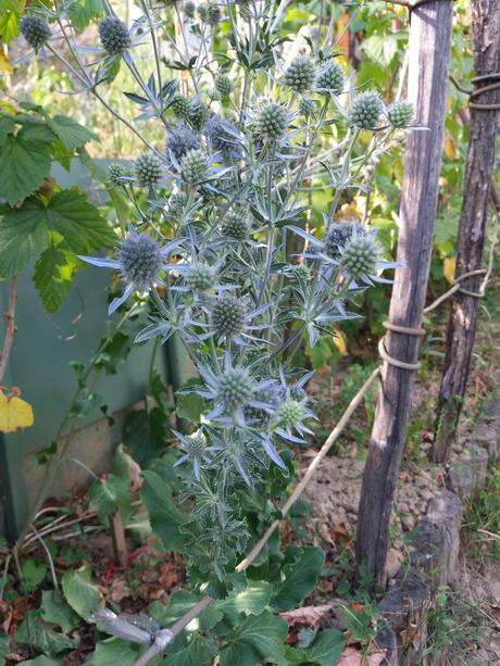 kotúč modrý-semienka - Obrázok č. 1