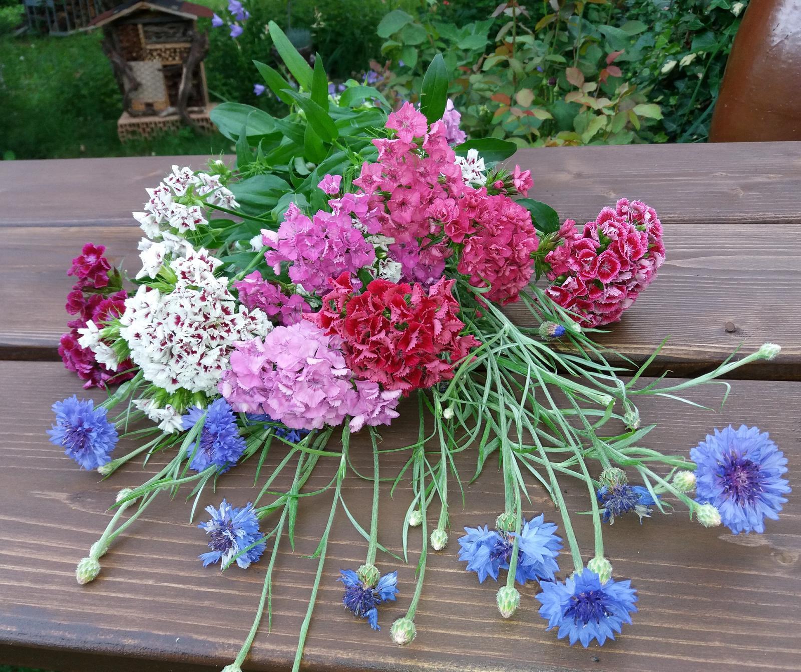 semienka kvetov - Obrázok č. 1