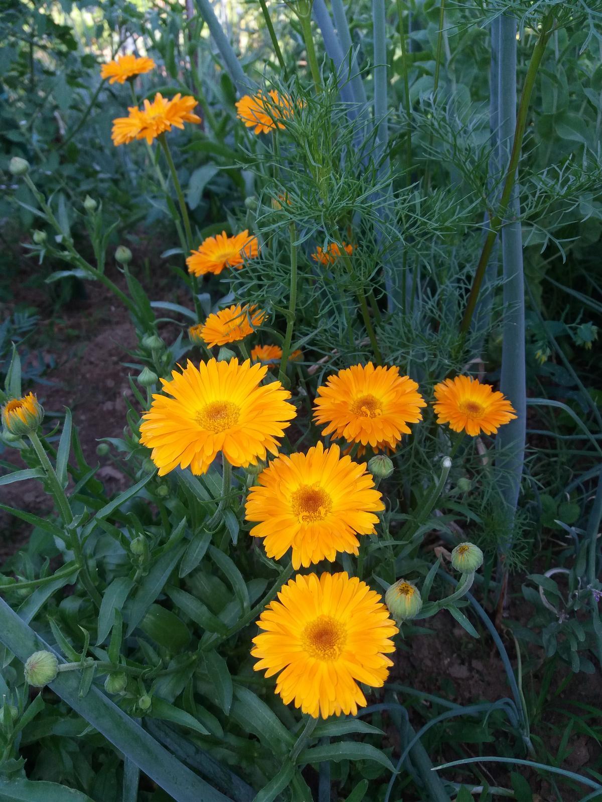 semienka kvetov - Obrázok č. 2