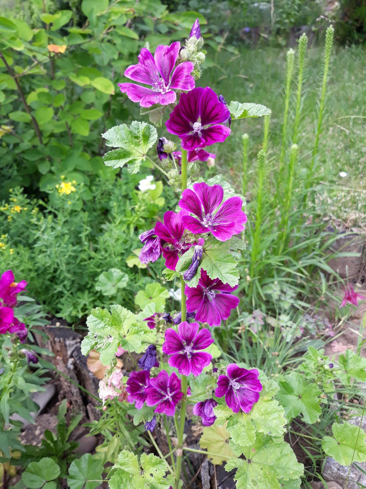 semienka kvetov - Obrázok č. 4