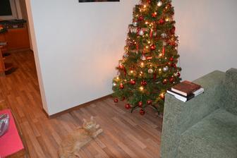 Jsem zvědavá, jak dlouho bude stromek odolávat náletům kocoura.
