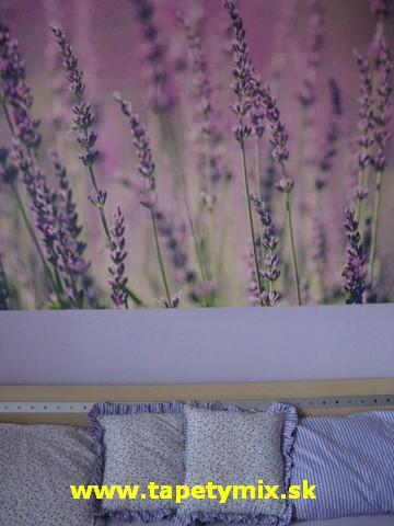Fototapety - realizace zakázek - Vliesová tapeta v ložnici - Levandule kód 24769