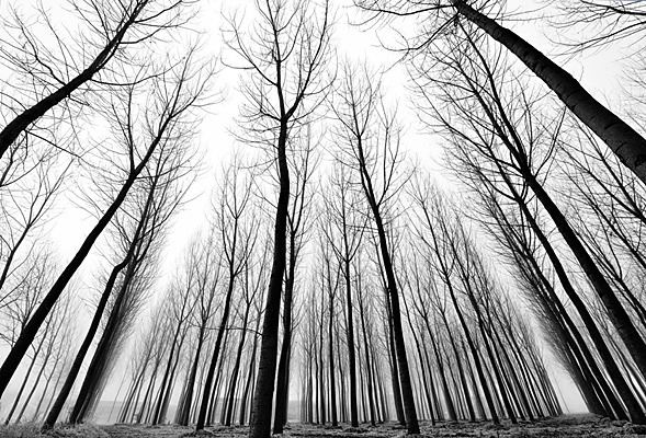 Stromy - fototapety - Obrázek č. 14