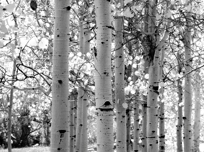Stromy - fototapety - Obrázek č. 21