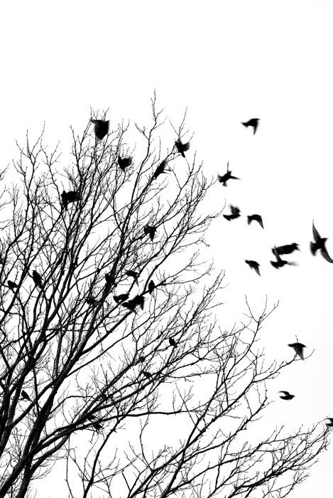 Stromy - fototapety - Obrázek č. 28