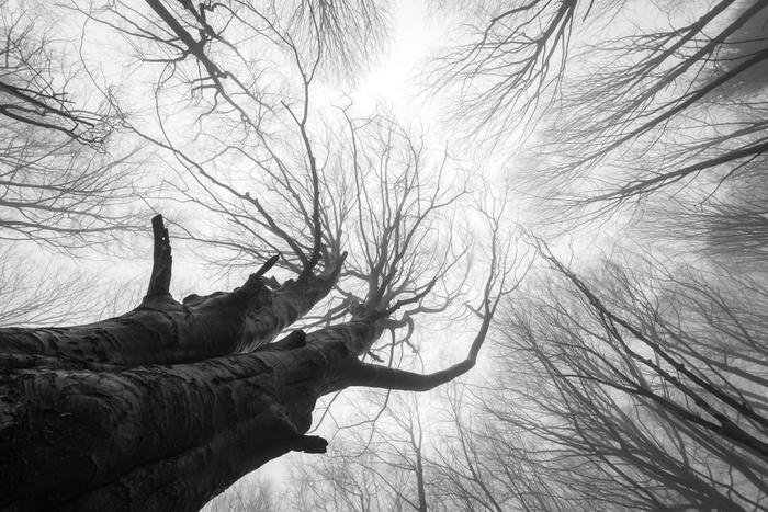 Stromy - fototapety - Obrázek č. 31