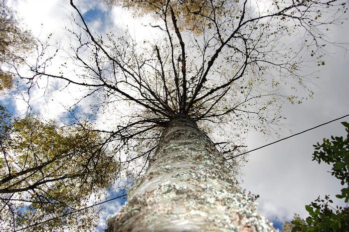 Stromy - fototapety - https://www.tapetymix.cz/fototapeta/tapeta-na-miru-strom-ft-5857769