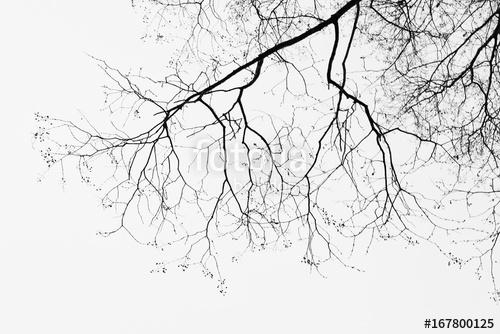 Stromy - fototapety - Obrázek č. 51