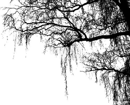 Stromy - fototapety - Obrázek č. 52