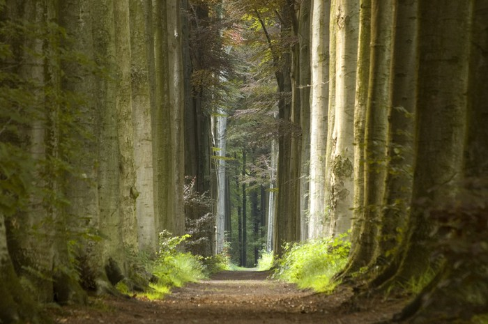 Stromy - fototapety - Obrázek č. 54