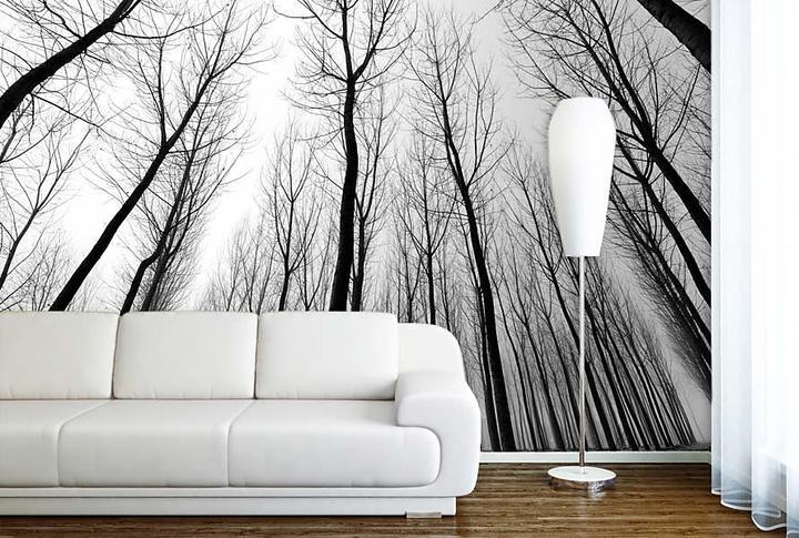 Stromy - fototapety - Obrázek č. 58