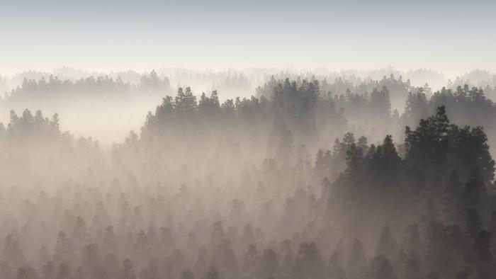 Stromy - fototapety - Obrázek č. 62