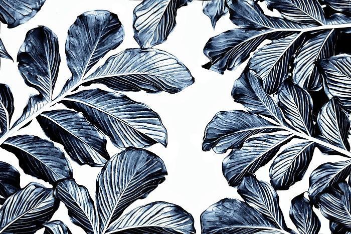 Tapety Tropicana - Obrázek č. 41