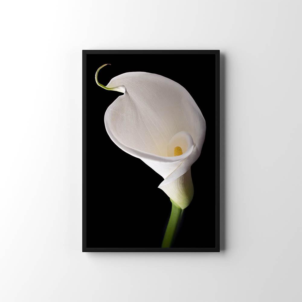 Plakáty s květinami 🌸🌼🌺 - Obrázek č. 20